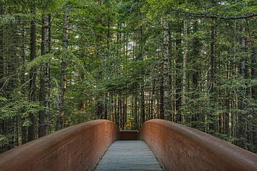 Footbridge in Redwood National Park, California, United States, Redwood National Park, California, USA