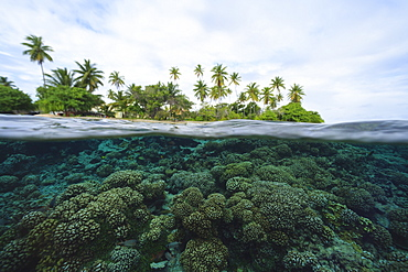 Reef in tropical water, Bora Bora, French Polynesia, Bora Bora, Bora Bora, French Polynesia