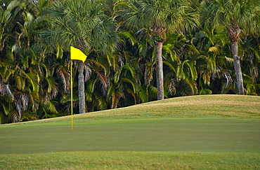 Palm trees growing by golf course, Palm Beach, Florida, USA