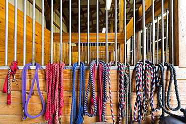 Ropes hanging from stalls in barn, Fairport, New York, USA