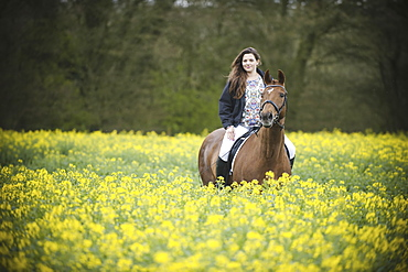 A woman riding on a brown horse through a flowering yellow mustard crop in a field., England
