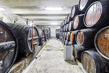 Barrels of wine aging in wine cellar, Peso da Regua, Vila Real, Portugal