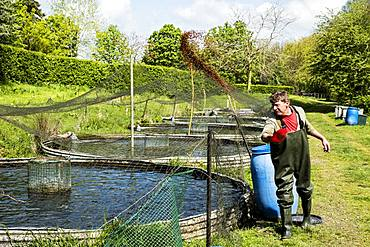 Man wearing waders standing next to water tank at a fish farm raising trout, feeding fish