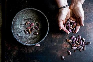 High angle close up of human hands holding grey metal bowl with purple speckled beans