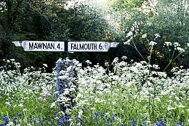 Traditional white signpost to Mawnan and Falmouth in Cornwall surrounded by white and blue wildflowers, Cornwall, United Kingdom