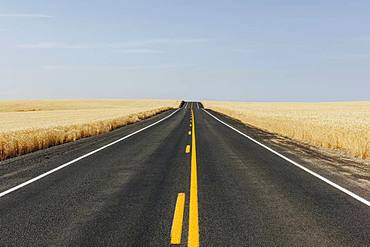Road through fields of summer wheat, Whitman County, Palouse, Washington, United States of America