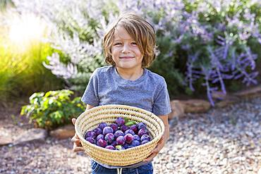 portrait of smiling 5 year old boy holding a basket of plums