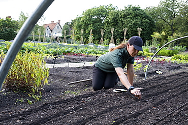 Woman kneeling in a vegetable bed, sowing seeds