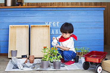 Japanese boy standing outside a farm shop, holding flower, looking at camera, Kyushu, Japan