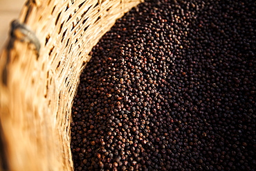 High angle close up of black peppercorns in a basket