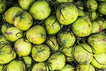 High angle close up of green coconuts piled high at a street side market, Thailand