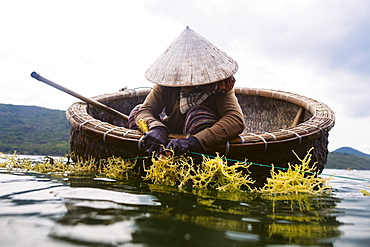 Woman wearing straw hat farming seaweed from a small wooden boat, Vietnam