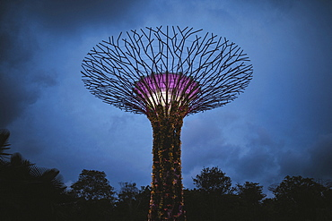 Low angle view of futuristic Supertree Grove at Gardens by the Bay in Singapore in the evening, Singapore