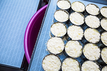 High angle close up of cheese-making, portioning of Camembert cheese into molds, Vietnam