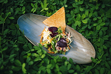 High angle close up of banana blossom salad with duck and herbs, Vietnam