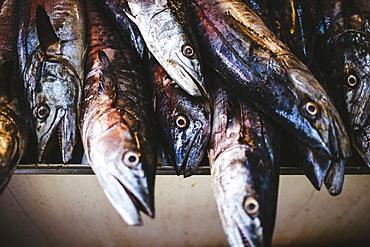 High angle close up of fish at a market, India