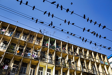 Low angle view of pigeons resting on electrical wires above an apartment building, Myanmar
