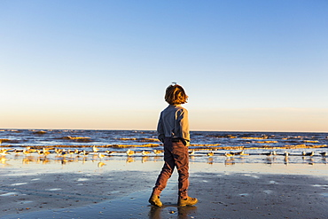 A boy walking on a beach, flock of seagulls on the sand, St Simon's Island, Georgia, United States