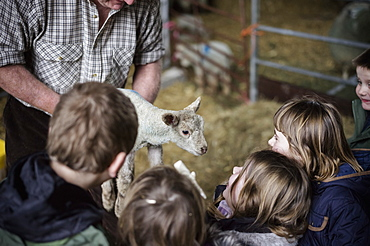 Children and new-born lambs in a lambing shed, Wimborne, Dorset, England