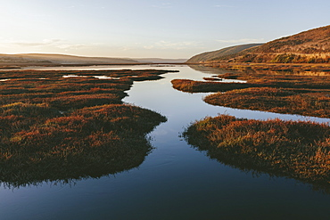 Intertidal estuary with water channels at dusk, Marin County, California, United States