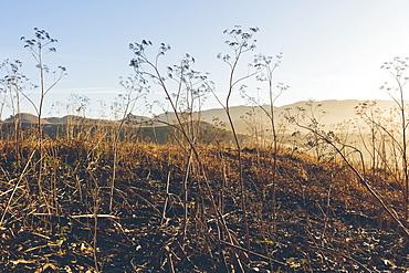 Point Reyes National Seashore, California, Marin County, California, United States