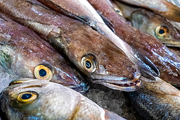 Fresh fish market, Algarve, Portugal