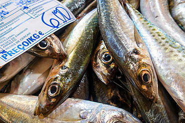 Fresh sardines in fish market, Algarve, Portugal