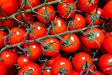 Red ripe tomatoes on the vine in market, Algarve, Portugal