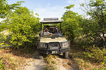 Safari jeep with a guide and passengers on a narrow track through scrub, Moremi Game Reserve, Botswana