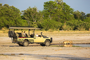 A safari vehicle and passengers very close to a couple of lions, panthera leo, drinking at a water hole, Moremi Game Reserve, Botswana