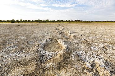 elephant footprints, Nxai Pan, Botswana