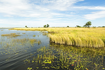 Reed-beds and waterways in the Okavango Delta, Botswana, Okavango Delta, Botswana