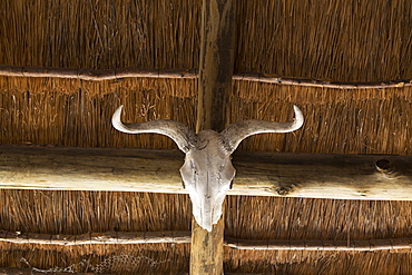 An animal skull with curved horns on a beam under a roof, Okavango Delta, Botswana