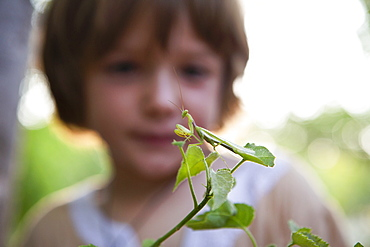 A five year old boy looking closely at a praying mantis on a leaf, Okavango Delta, Botswana