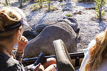 Two people in a jeep looking at a dead elephant carcass