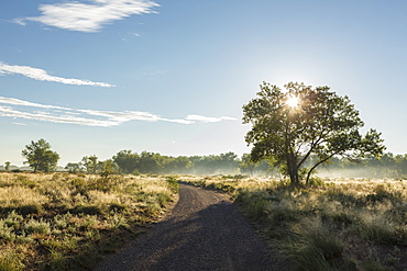 Trees and country road at sunrise