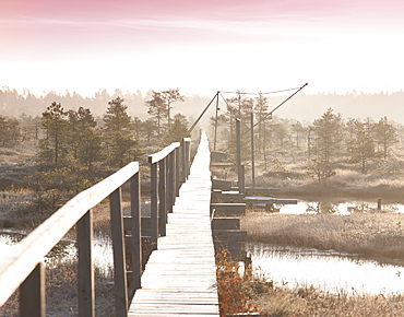 Wooden Boardwalk over Marsh, Estonia