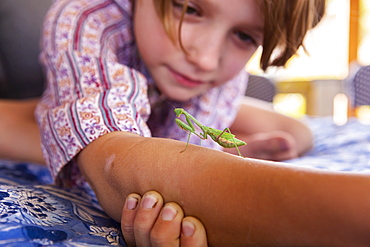 7 year old boy holding a praying mantis, New Mexico, United States