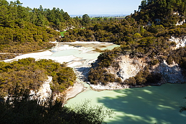 elevated view, thermal pools with mist rising from the heated water, Rotorua, North Island, New Zealand