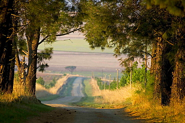 View along country road through farm land in Drakensberg, South Africa