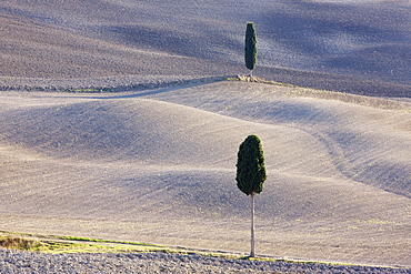 Trees in rural farming landscape