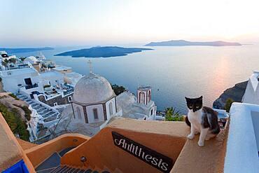 Cat, church & Fira town at sunset, Fira, Santorini, Cyclades Islands, Greece