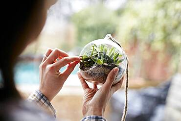Close up of woman's hands caring for plants within glass terrarium, Bristol, United Kingdom
