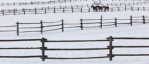 Horses in paddocks on a ranch in the snow at Palouse, Washington, USA, Palouse, Washington, USA