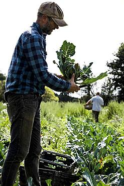 Farmer with freshly picked Romanesco cauliflower.