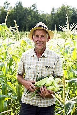 Farmer standing in a field, holding freshly picked sweetcorn.