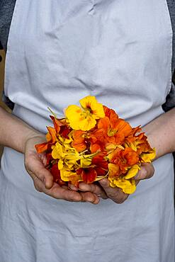 Close up of person holding bunch of edible flowers.
