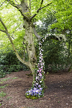 Flower garland in a tree for a woodland naming ceremony.