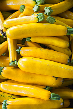 Organic vegetables on a farm stand. Piles of fresh courgettes, Rhinebeck, New York, USA