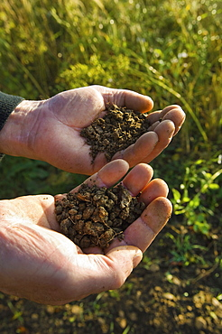 Close up of a man's hands holding soil samplesFarmer soil sampling, Gloucestershire, England